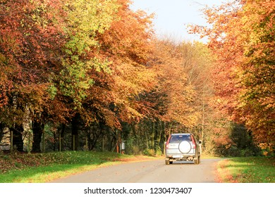 Road with car and trees in autumn colours. Yellow, orange.