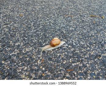 Road climbing snail after rain