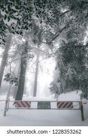 Road Closure Gate of a mountain road covered in snow and surrounded by snow covered trees. Located on Black Mountain Road in Idyllwild, California, USA.