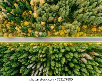 Road in the colored autumn forest aerial view