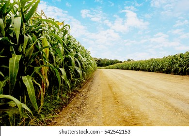 road to corn fields.can use background.