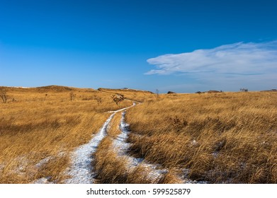 The road is covered with snow through a meadow with high grass.