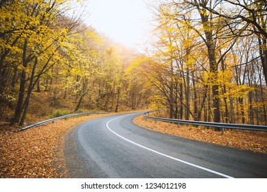Road curve across autumn forest