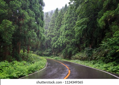 Road curves through beautiful green mountain forest on rainy day