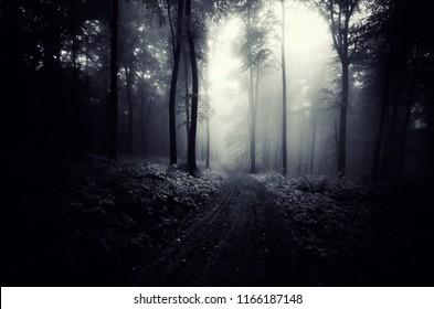 road in dark forest, halloween landscape background