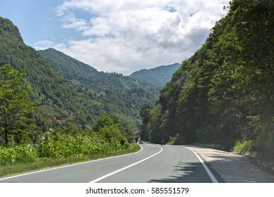 Road in Deep Forest-Rize,Turkey