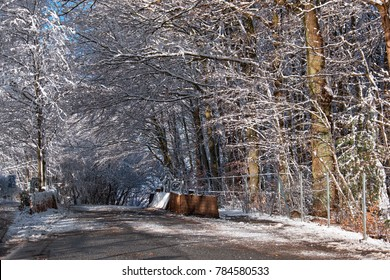 Road in Denmark with low hanging branches, heavy from snow, forming a white roof