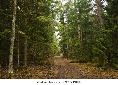 road in the dense forest