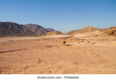 road in a deserted area passing between multi-colored mountains of sandstone, single-horned camel in the background, against a blue sky, Southern Sinai, Egypt
