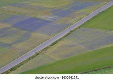 A road diagonally crosses the plateau of Castelluccio da Norcia, among spring blooms of poppies, cornflowers, lentils and spontaneous flowers, Umbria, Italy