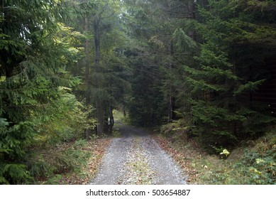 Road disappearing into the woods. Forest trails among tall trees
