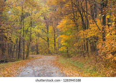 Road in fall, Stephen A. Forbes State Park, Marion County, IL