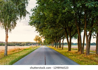 Road in field accompanied by row of green trees, skyline and nature on background. Landscape of flat terrain at sunset. Road looks alluringly to wanderlust. Roads and travels concept.