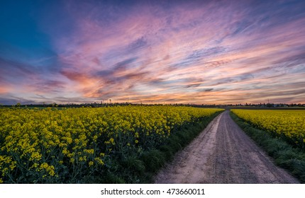 Road in a field during sunset