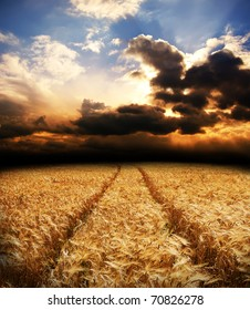 road in field with gold ears of wheat under dramatic sky