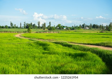 Road in field, green farm land, landscape