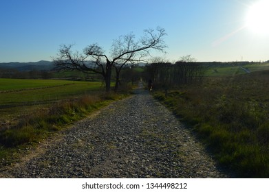 Road, field and horse