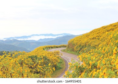 The road to the field of Mexican Sunflower Weed on the mountain,Mae Hong Son Province,Thailand.