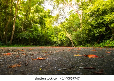 The road floor is full of flower debris in the morning.  With a green tree background.
