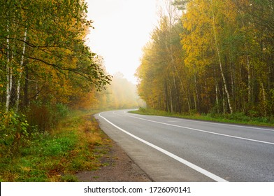 Road in the fog. Autumn time in the forest