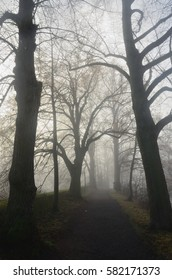 Road in foggy park