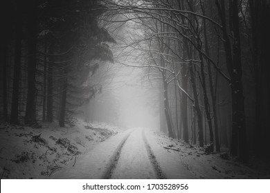 road in the foggy winter forest