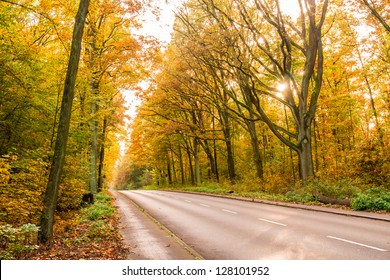 a road in a forest in autumn