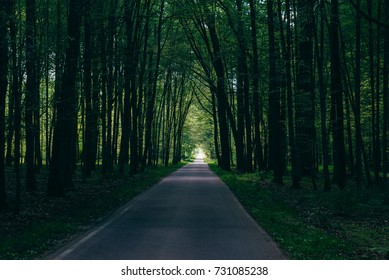 Road in the forest (Belovezhskaya Pushcha)
