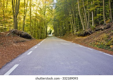 Road in the forest of El Montseny (Barcelona, Spain) in autumn.