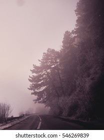 Road in the forest with fog, enchanted tree