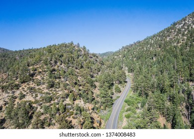 Road in forest hills covered in pine trees in California mountains.