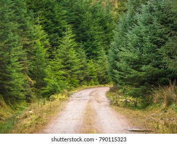 Road in the forest - Ireland