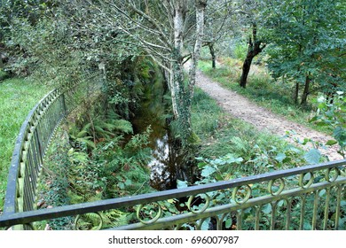 Road in the forest with metal fence, Walking through the natural park of Souto da Retorta, Lugo, Galicia, Spain, Europe, a walk in the woods, With the largest tree in Europe
