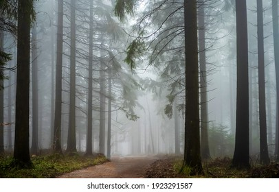 Road in forest mist view. Forest mist. Fog in forest mist. Misty forest trail view