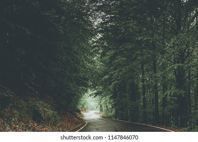 road in the forest - moody style image