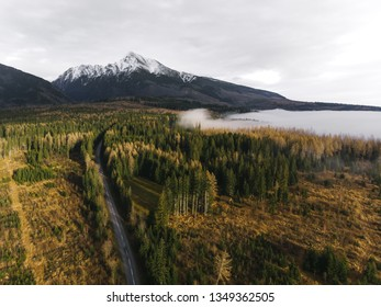 Road and Forest in the Mountains - Shutterstock ID 1349362505