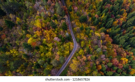 road in forest from sky