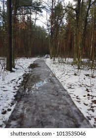 Road in the forest with snow after raining