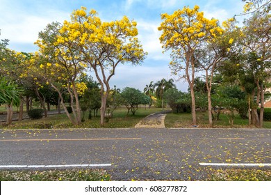 Road in full of yellow flowers spring forest