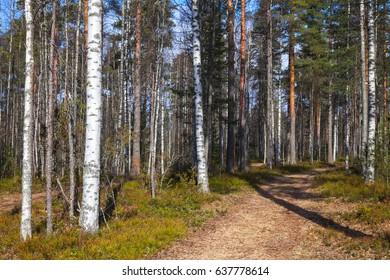 Road goes in spring European forest. Background photo, Imatra Region, Finland
