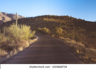 Road going through Saguaro National Park East in Tucson Arizona desert landscape