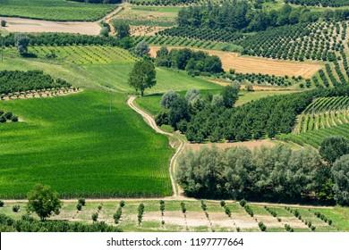 The road to Govone and San Martino Alfieri, Asti, Monferrato, Piedmont, Italy, at summer. Vineyards