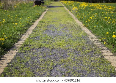 road with gras