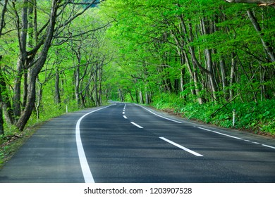 Road in a green forest
