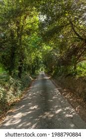 Route dans la forêt verte
