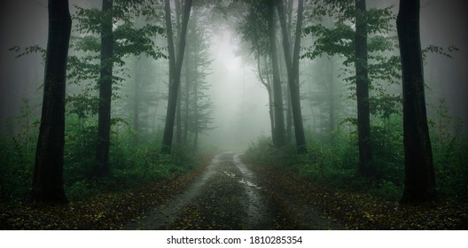 road in green forest with fog, high res forest panorama