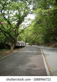 the road to gyeryong mountain in south korea