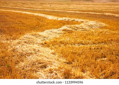 road from the hay on the harvested field of wheat