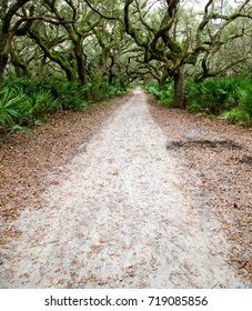 Road headed into the Maritime Forest of Live Oaks on Cumberland Island, Georgia