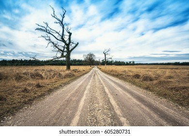 road to the horizon with a dead tree